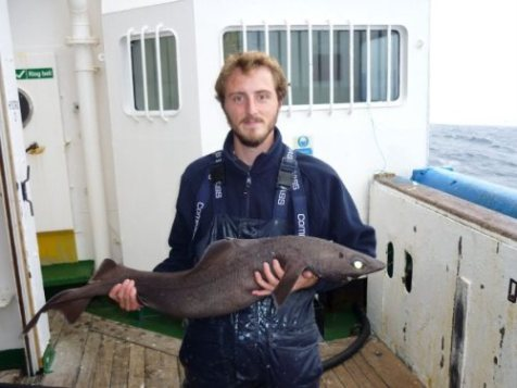 Daniel has worked with deep sea sharks extensively such as this specimen collected in the North Atlantic.