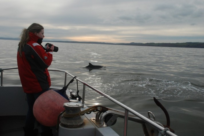 Surveying dolphins